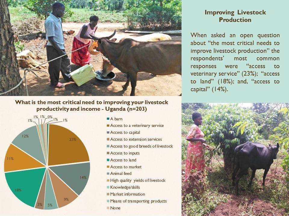 improving-livestock-production