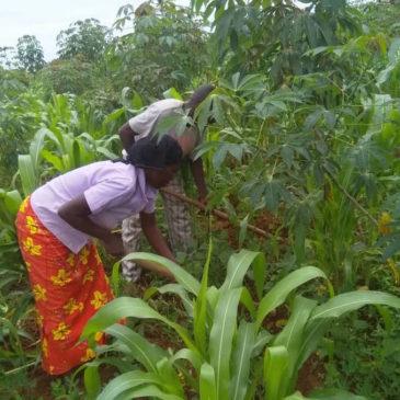 Lives vs Livelihood: Refugees in Uganda – Part 3